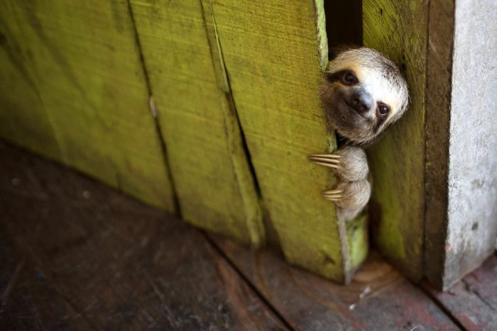 cute-sloths-301-58086516ea66c-jpeg__700