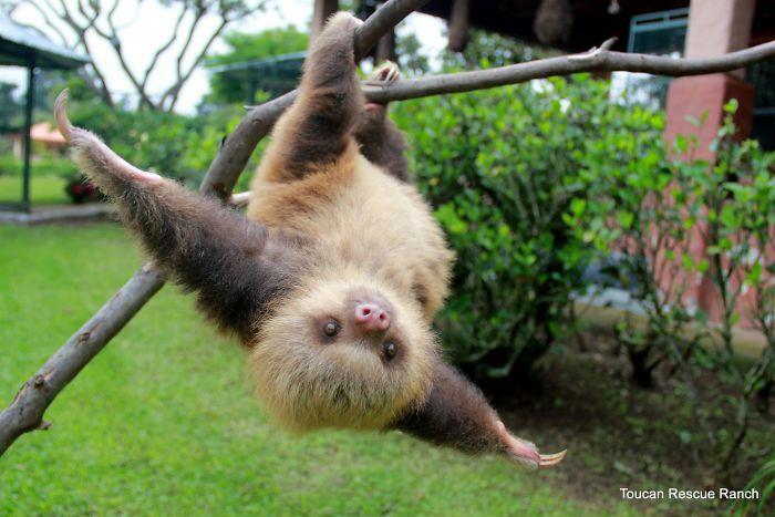 cute-sloths-314-580874913a3d1__700