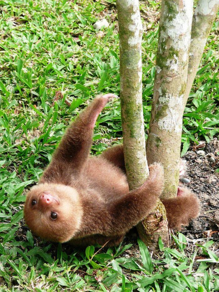 cute-sloths-319-5808848577a9b__700