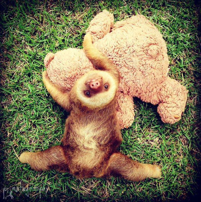 cute-sloths-57ee6c174f6e8__700