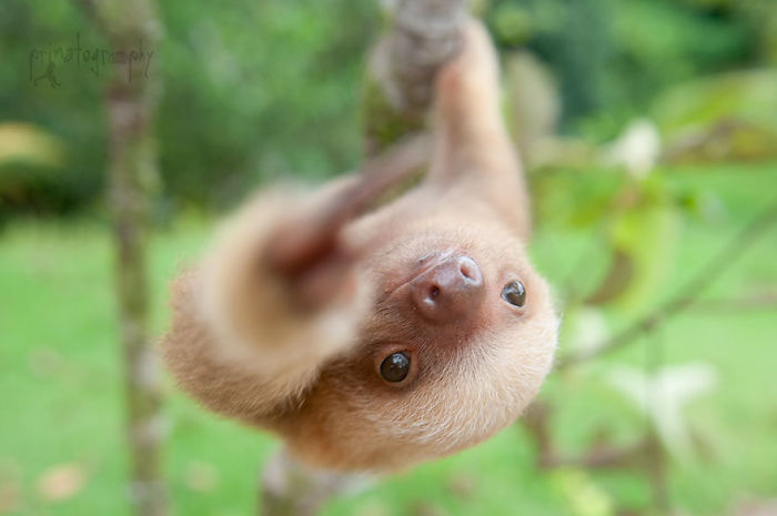 cute-sloths-57ee6f01ab895__700