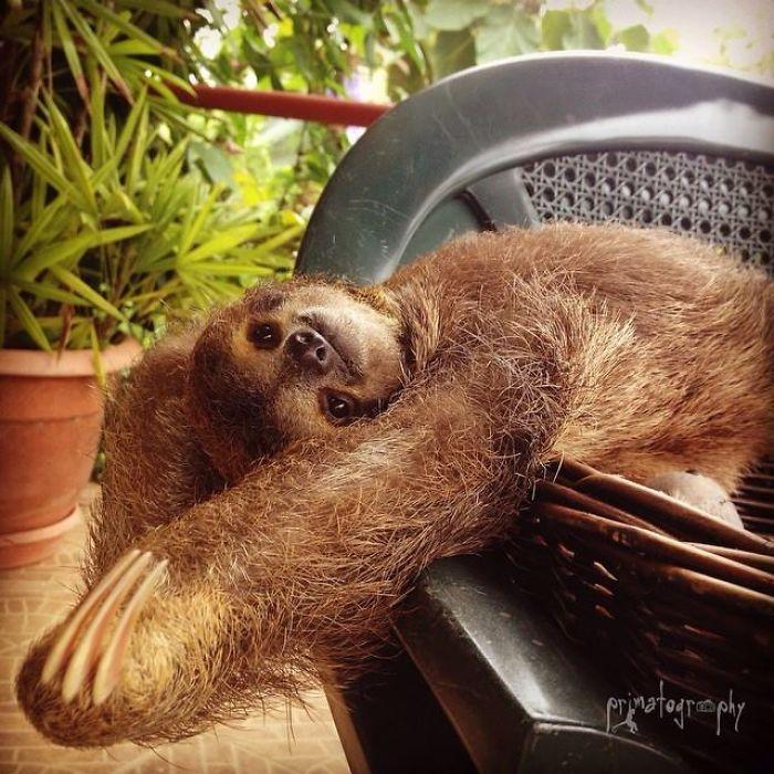 cute-sloths-57f26c021e81c__700
