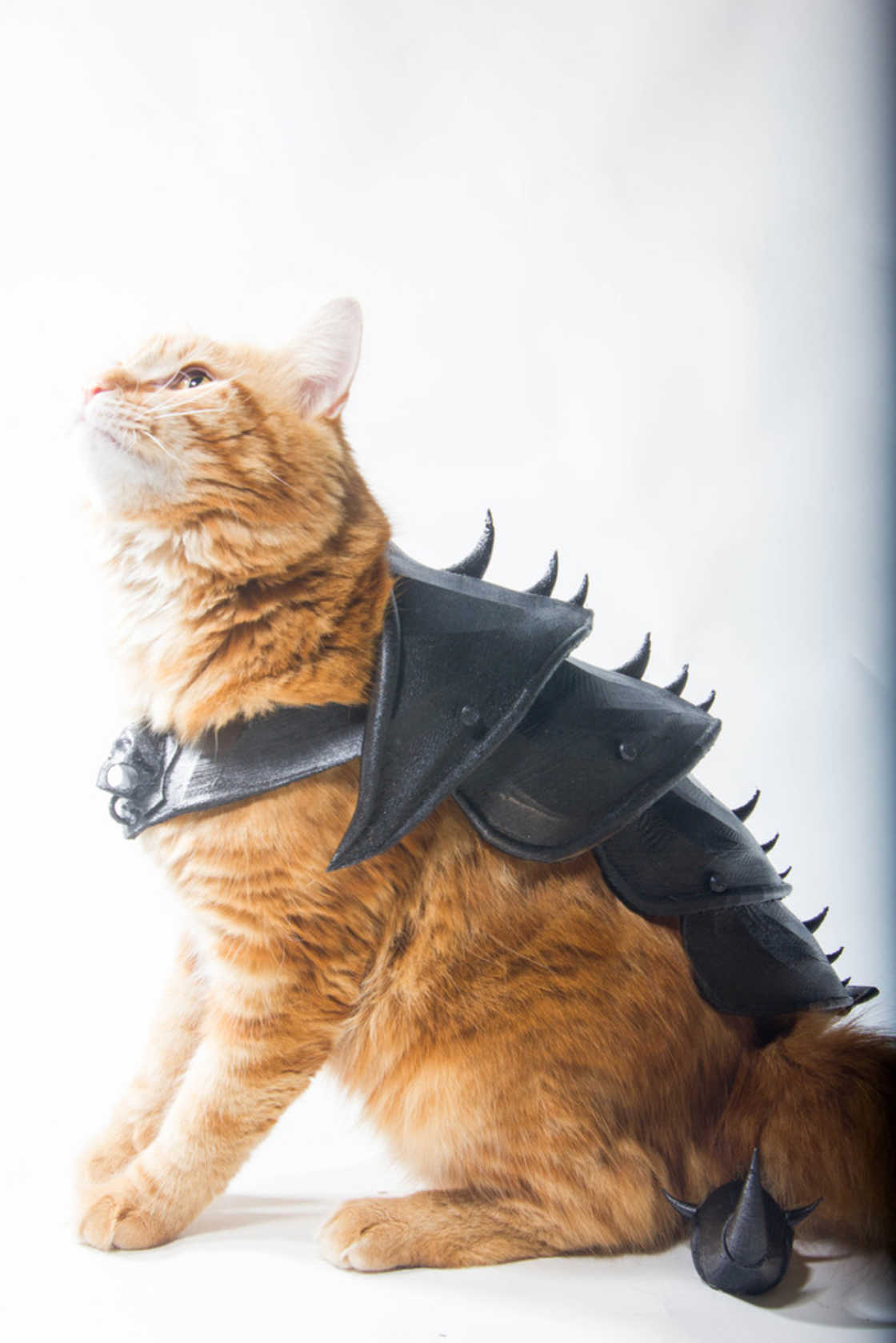 armure-pour-chat-11