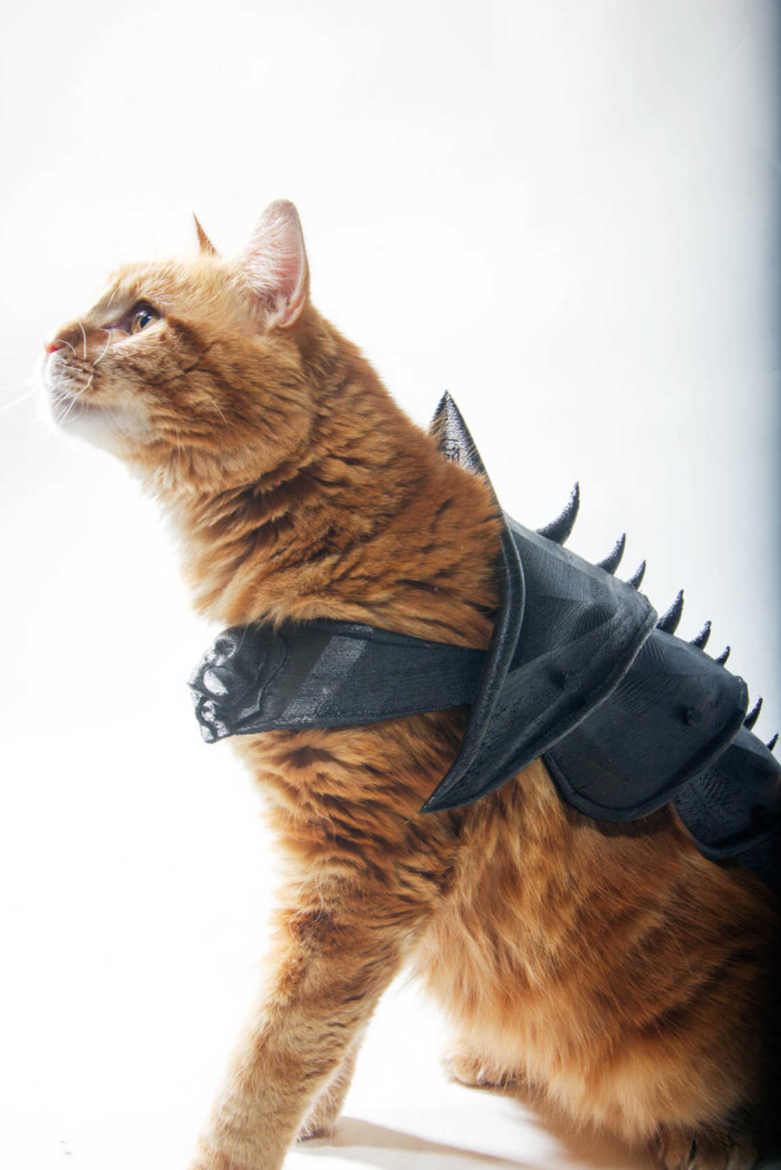 armure-pour-chat-12