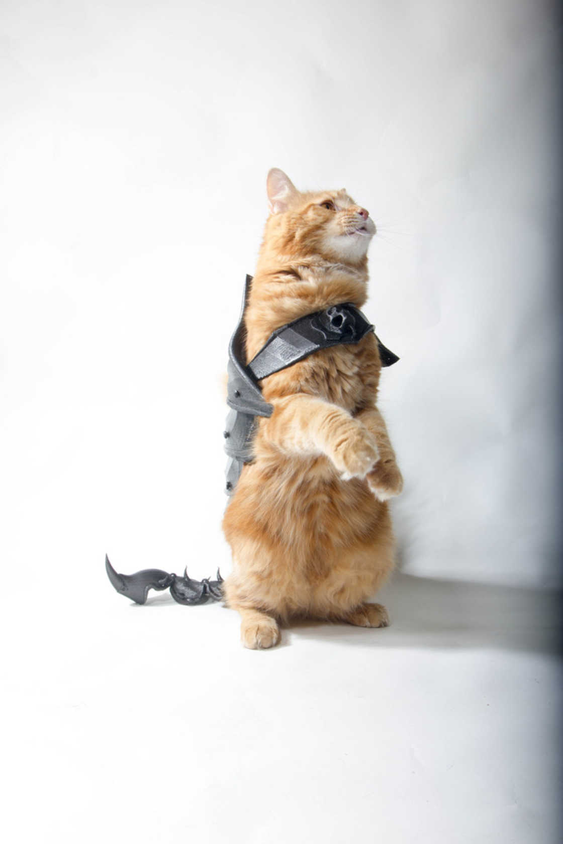 armure-pour-chat-13
