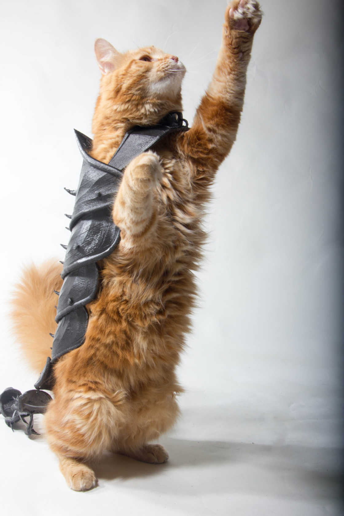 armure-pour-chat-15