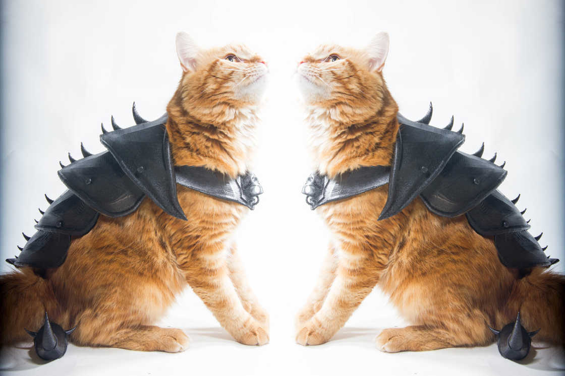 armure-pour-chat-top