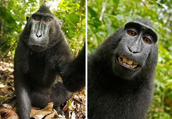 funny-animal-selfies-108-587e1a088c779__605