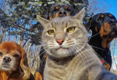 funny-animal-selfies-fb