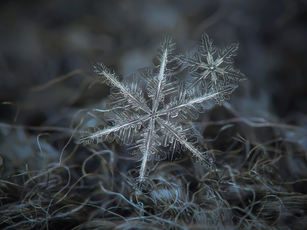 heres-another-shot-of-two-snowflakes-that-buddied-up