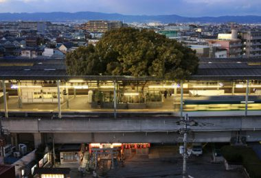 train-station-700-year-old-tree-kayashima-japan-2