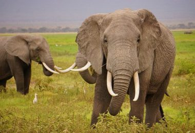 wild-elephants-1724217-640-638x425
