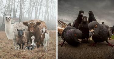 copertina animali
