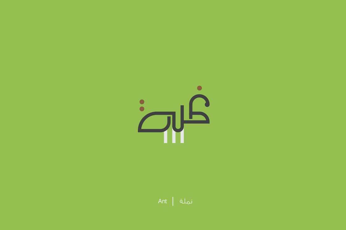 expliquer-les-lettres-arabes-24