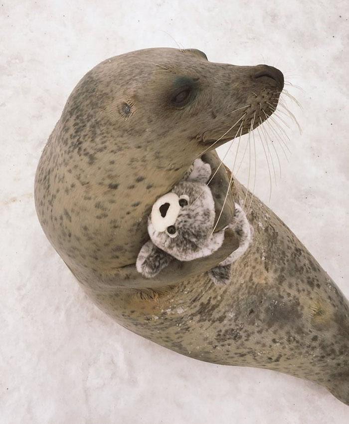 foca peluche 3