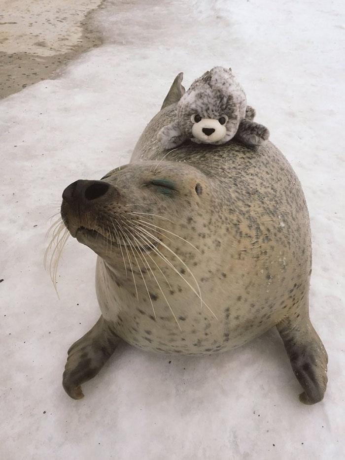 foca peluche2
