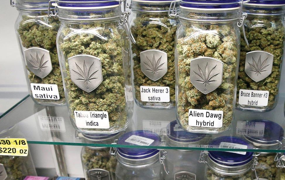 marihuana-portada