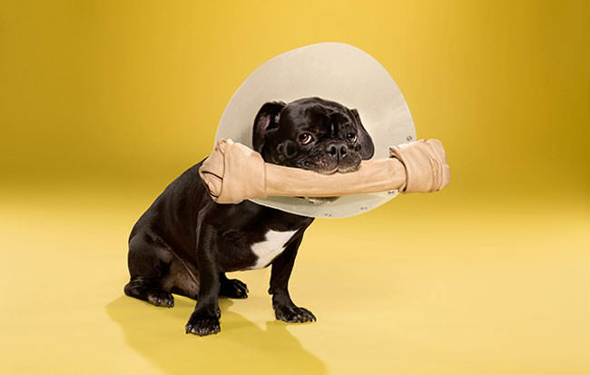 Adorable-portraits-show-how-dogs-despise-wearing-the-cone-of-shame4-650x413
