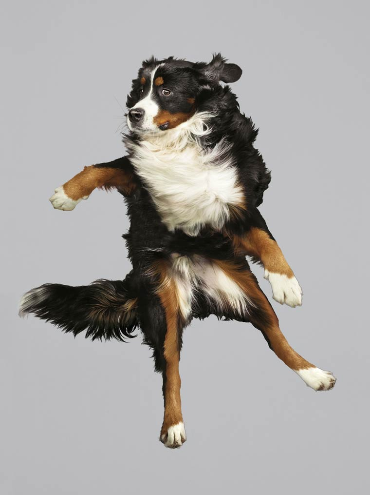 Julia-Christe-Flying-Dogs-1