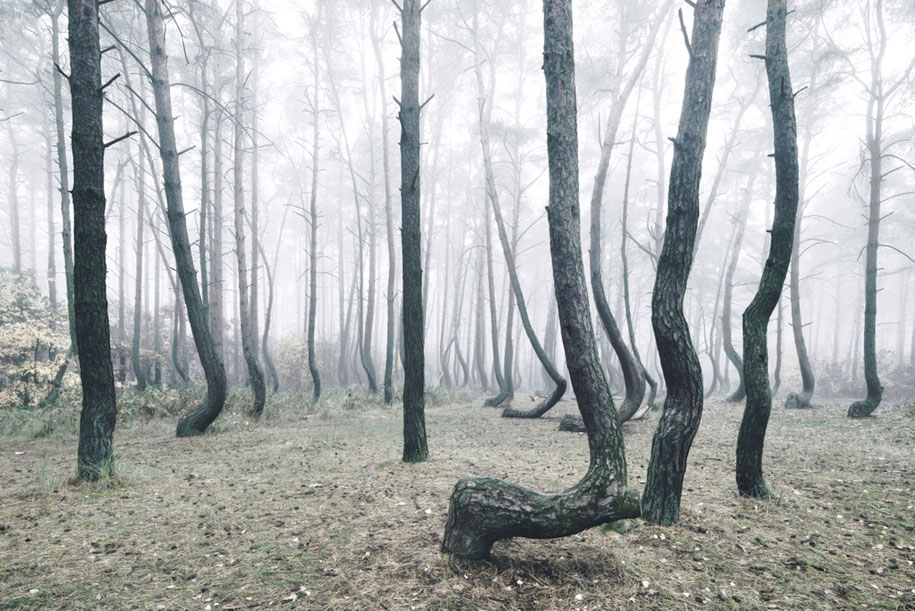nature-photography-twisted-trees-crooked-forest-kilian-schonberger-1