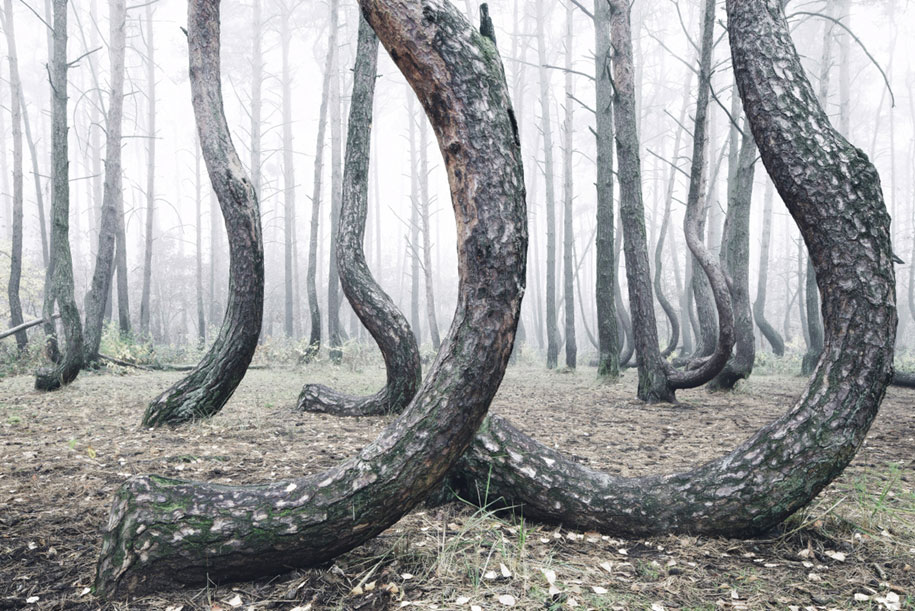 nature-photography-twisted-trees-crooked-forest-kilian-schonberger-3