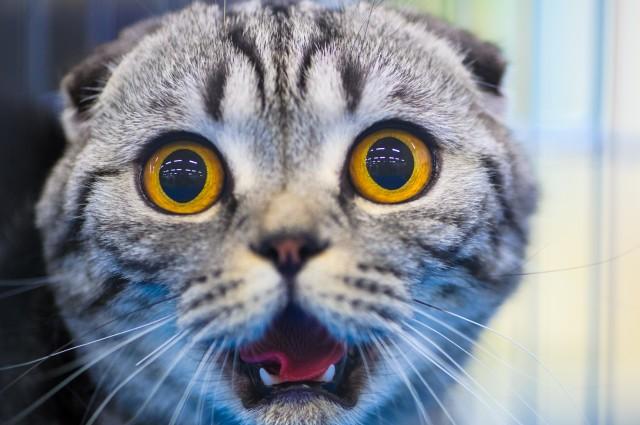 Perché I Gatti Hanno Una Paura Folle Dei Cetrioli Darlin Magazine
