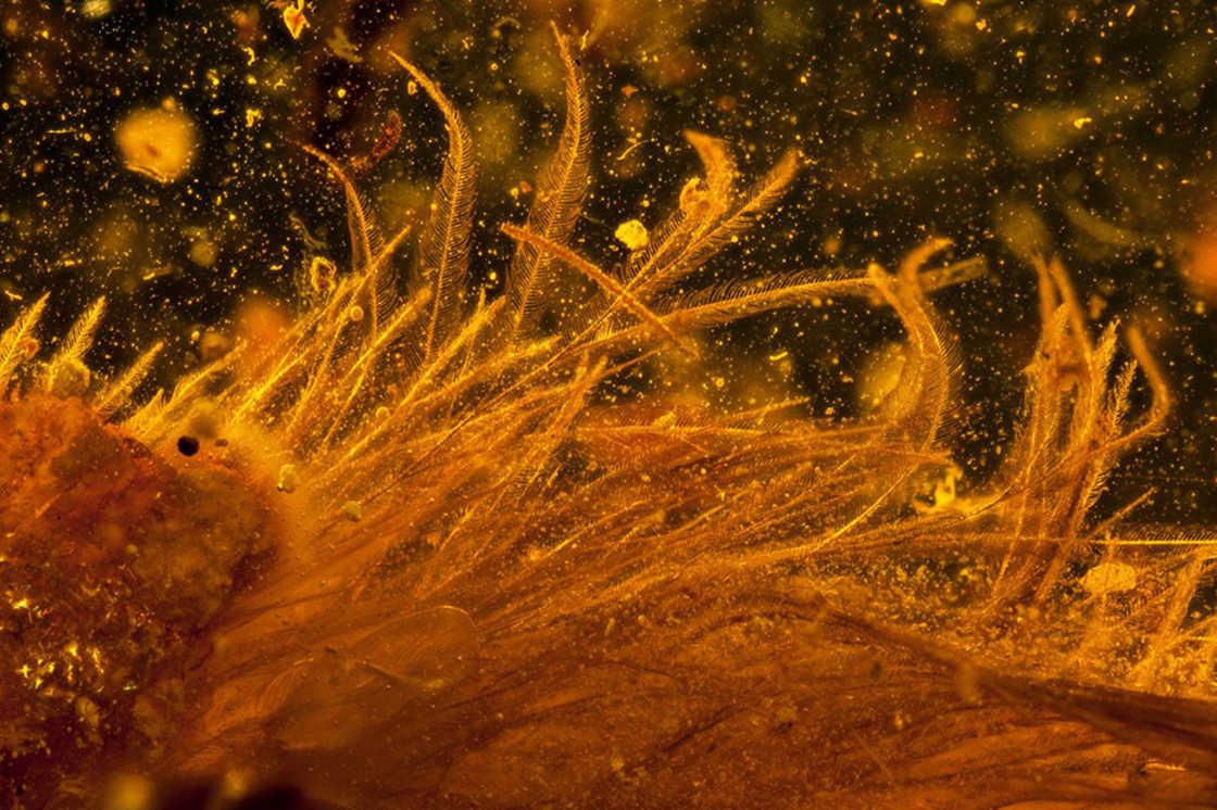 queue-de-dinosaure-plume-ambre-8