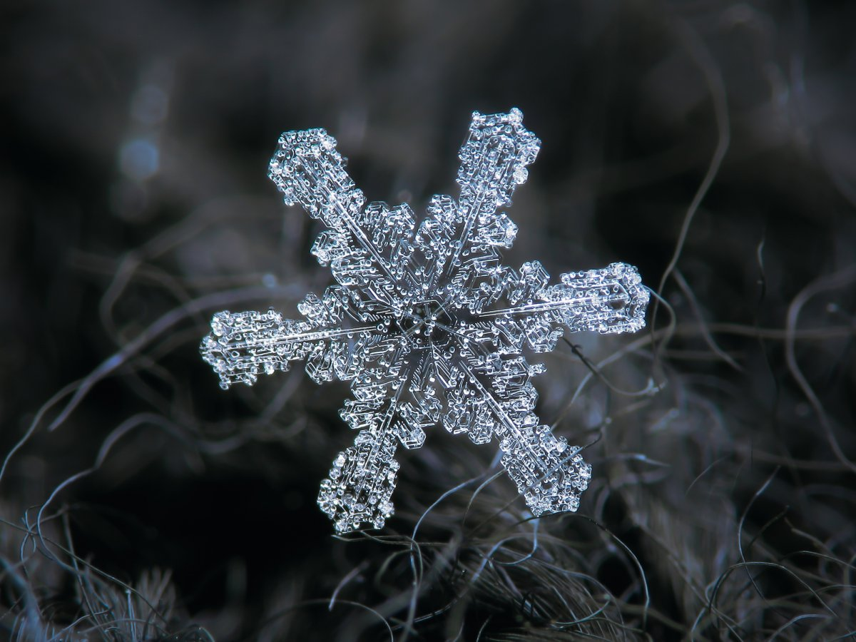 and-a-frosty-lil-fella-whose-six-prongs-look-almost-fuzzy