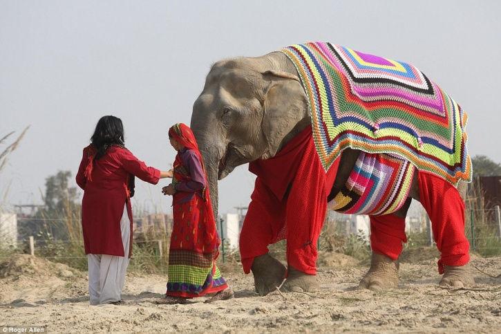 elefante-maglione