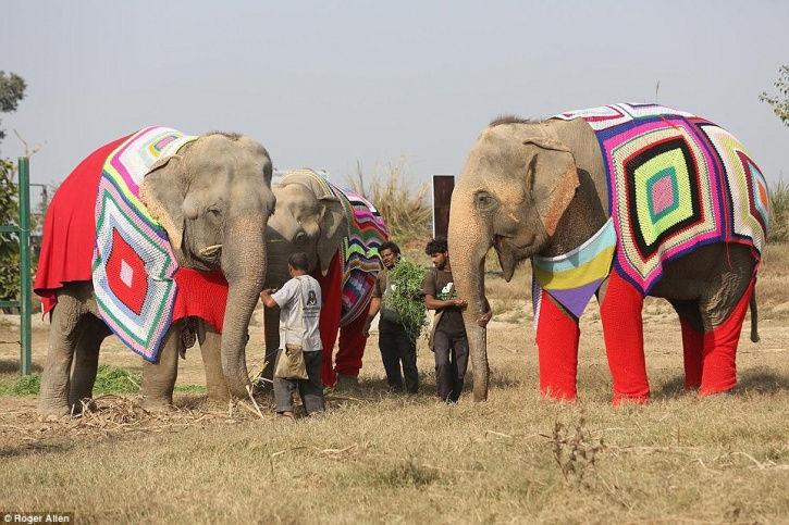 tre-elefanti-pigiama