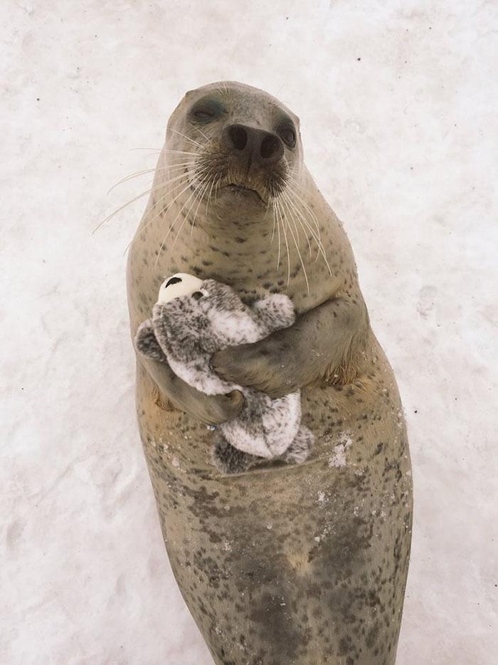 foca peluche