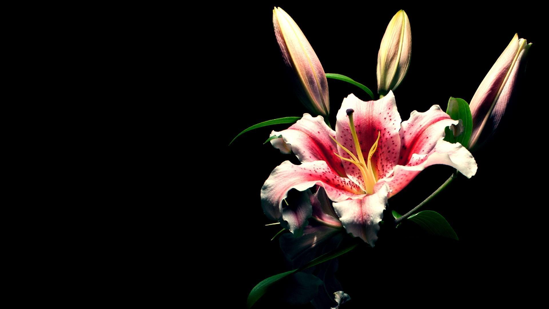 time-lapse-primavera