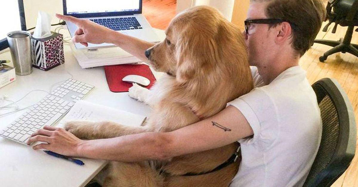 Genova: cani in ufficio durante orario di lavoro